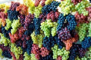 Разнообразие винограда