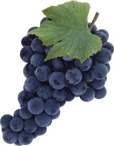 vinograd-izabella-otzyvy-1364821295