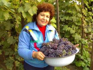 vinograd-izabella-podmoskove-uhod-obrezka-1-300x225