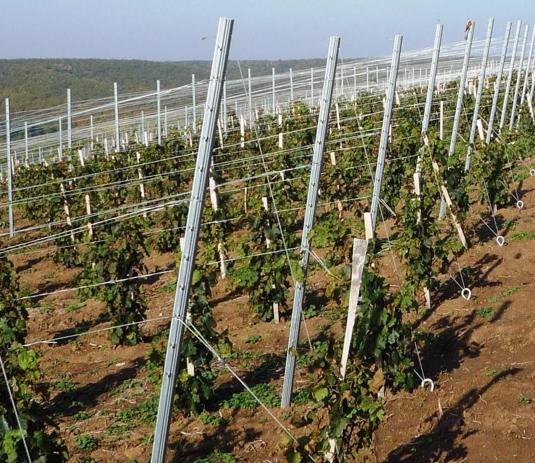 Столбики для винограда своими руками