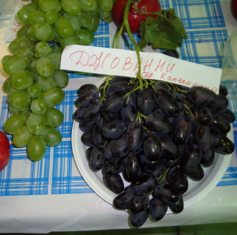 джованни и описание фото виноград